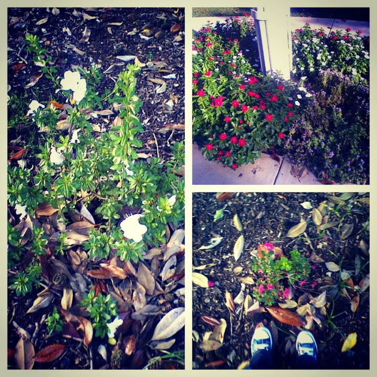 Flowery Day :) - Augusta State University