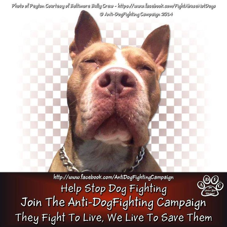 help stop dog fighting