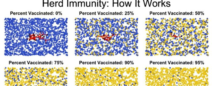 This Short Animation Explains Beautifully How Herd Immunity Works - One of the most common questions you'll hear from people who don't want to get vaccinated is: