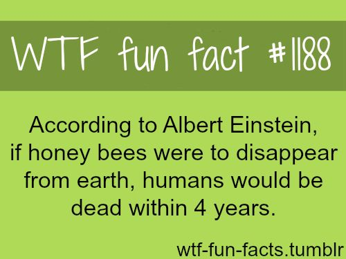 "wtf-fun-facts: "" Albert Einstein theory - honey bees MORE OF WTF-FUN-FACTS are coming HERE funny and weird facts ONLY """