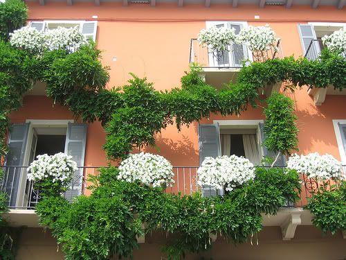 Piante per avere un balcone fiorito tutto l 39 anno cerca for Piante da balcone tutto l anno