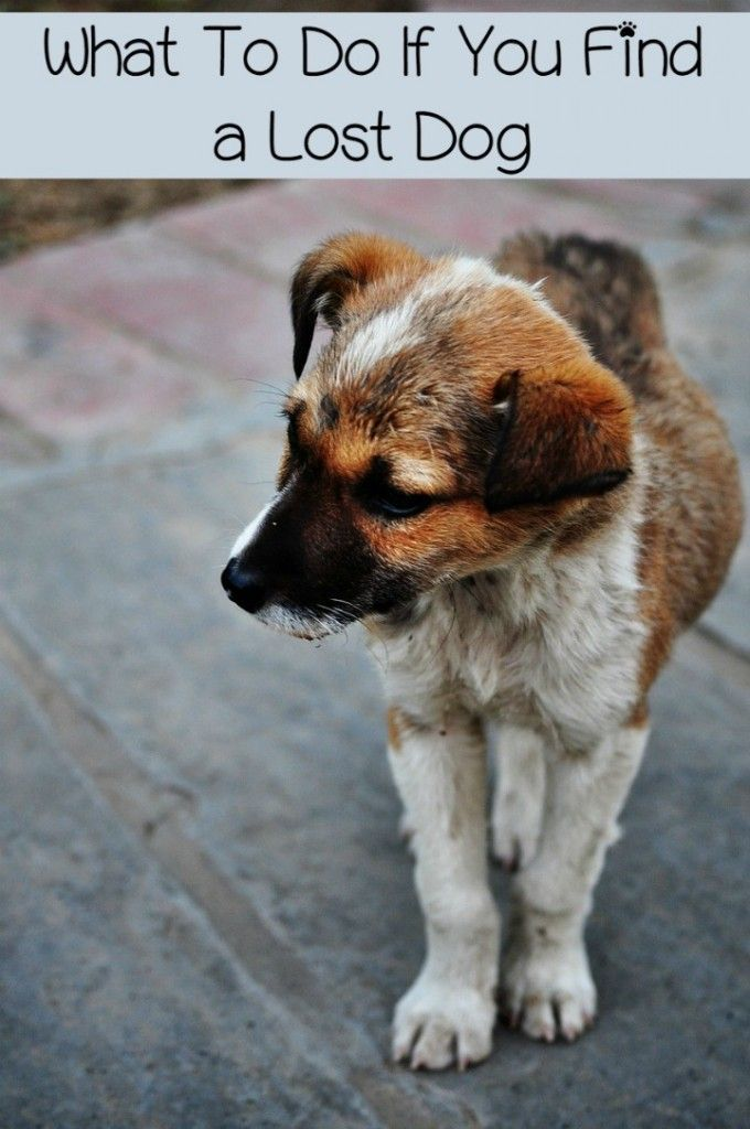 What To Do If You Find A Lost Dog Losing A Dog Your Dog Dogs