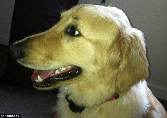 """O GRITO DO BICHO"": Golden morre esquecido no secador de Petshop"