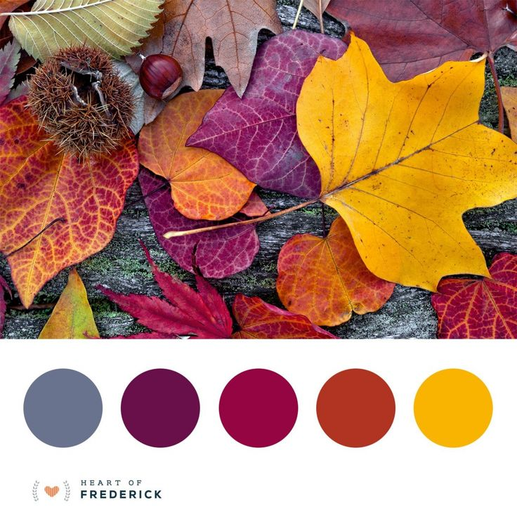 Best 25 autumn color palette ideas on pinterest colour - Decorative trees with red leaves amazing contrasts ...