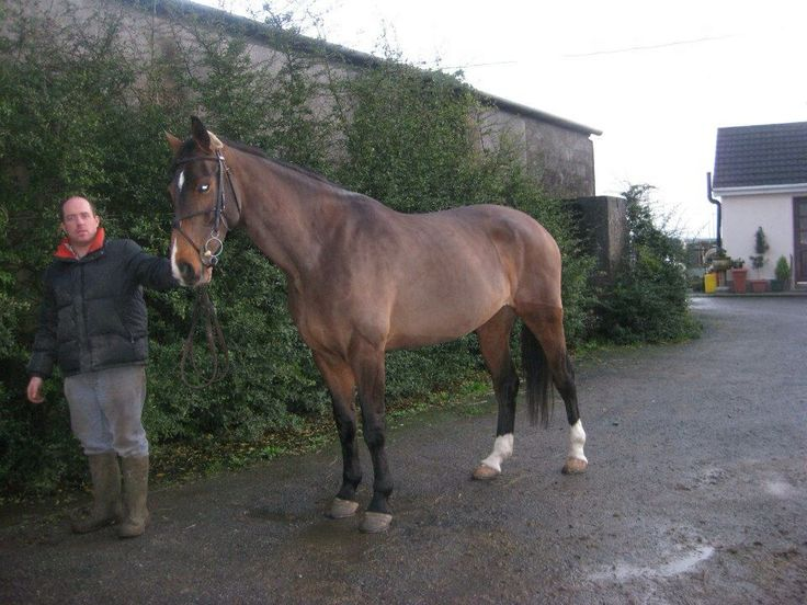 Kim,sold to Scotland. Showjumping successfully and also bred a horse that jumped the 4yr olds last yr at the RDS