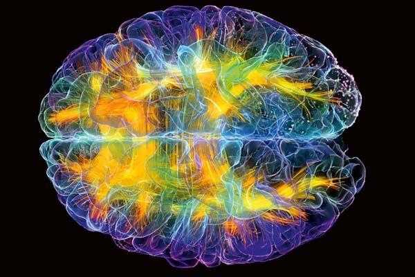 neuronas sinapsis - Buscar con Google