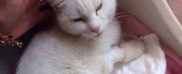 Tiro al bersaglio con la pistola contro una gattina, orrore a Vallo della Lucania
