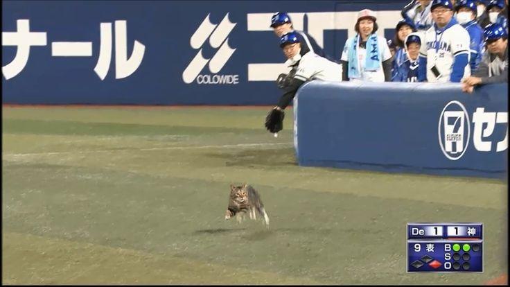 DeNA×阪神 試合中に猫が乱入 2017/4/13