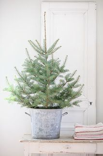 Christmas inspiration, tree in a zinc pot. Great for an outdoor tree that you can plant later!
