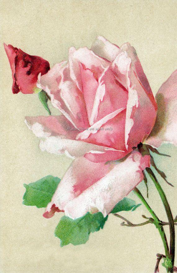 Tarjeta de felicitación del Repro Catherine Klein por KatyDidsCards