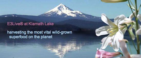 buy E3live blue green algae klamath lake by @BlenderBabes