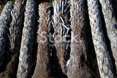 New Zealand Punga Log Background Royalty Free Stock Photo