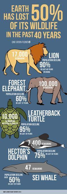 Earth has lost 50% of its WildLife in the past 40 Years.!