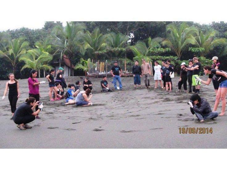 Panamá. La Fundación Agua y Tierra tiene viveros para ayudar a la reproducción de las tortugas marinas, en alianza con la Asociación Agropesca y Ecoturística de Quebro, en la Península de Azuero.