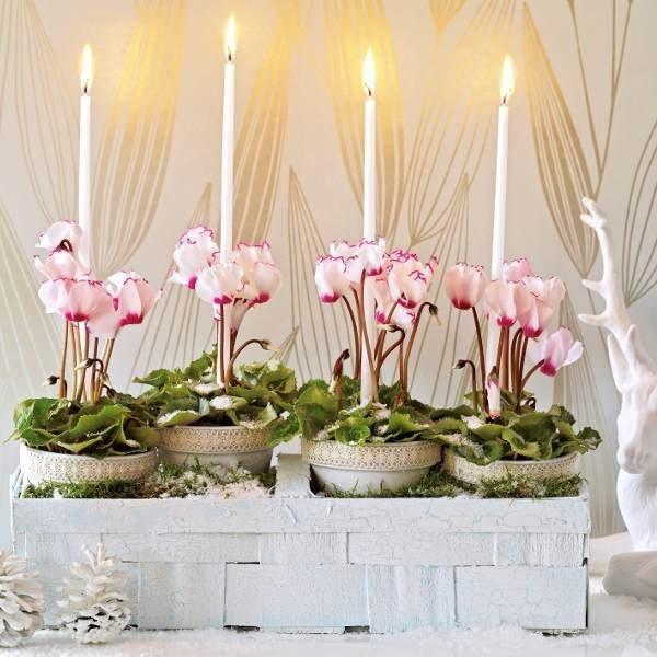 ber ideen zu alpenveilchen auf pinterest besenheide herbstpflanzen und zierkohl. Black Bedroom Furniture Sets. Home Design Ideas
