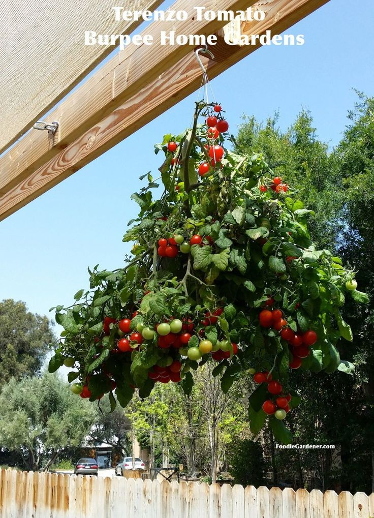 Grow a Container Vegetable Garden on Your Patio: Tips | The Foodie Gardener™