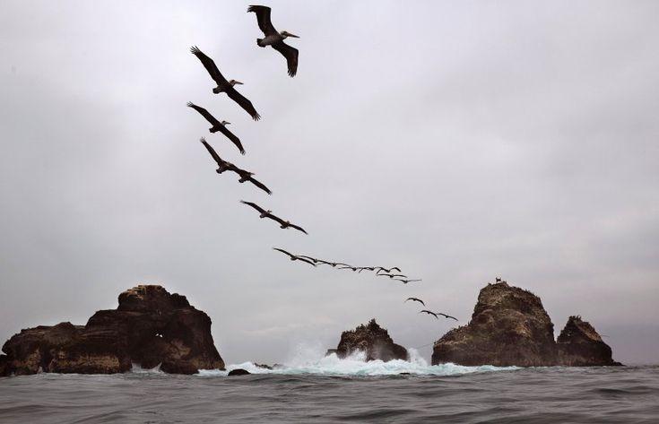 Pelikane in Formation: Obwohl Lima, die Hauptstadt von Peru, in den Tropen...