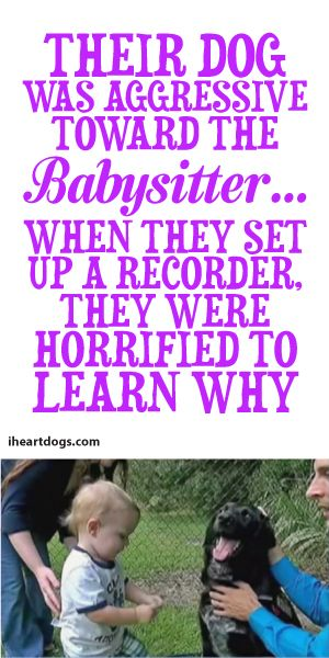 Their Dog Was Aggressive Towards The Babysitter... When They Set Up A Recorder, They Were Horrified To Learn Why!