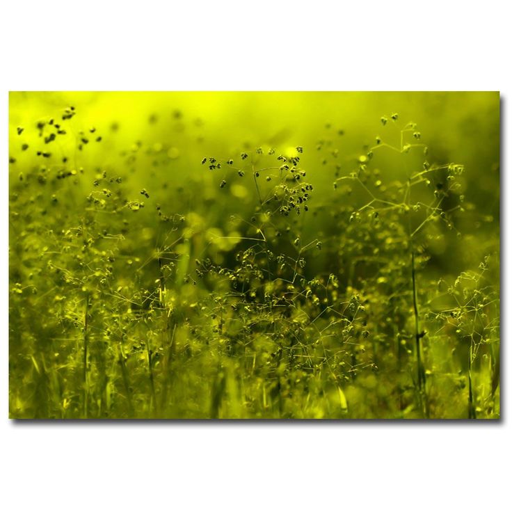 Trademark Fine Art Beata Czyzowska Young 'Symphony in Green' Canvas Art