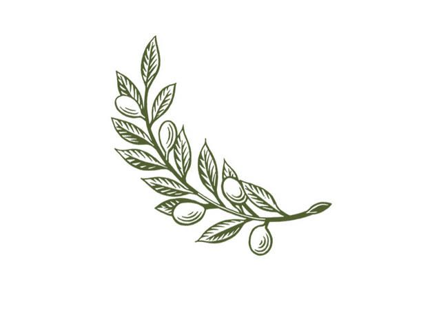 olive branch - Google Search