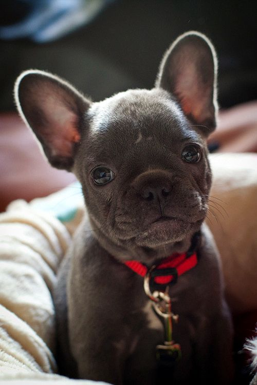 Okay, this is probably the only exception I would make to having a small dog :)