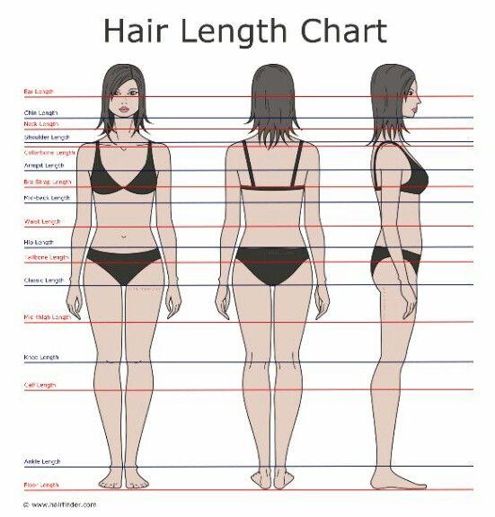Best 25 Hair Length Chart Ideas On Pinterest Length Of