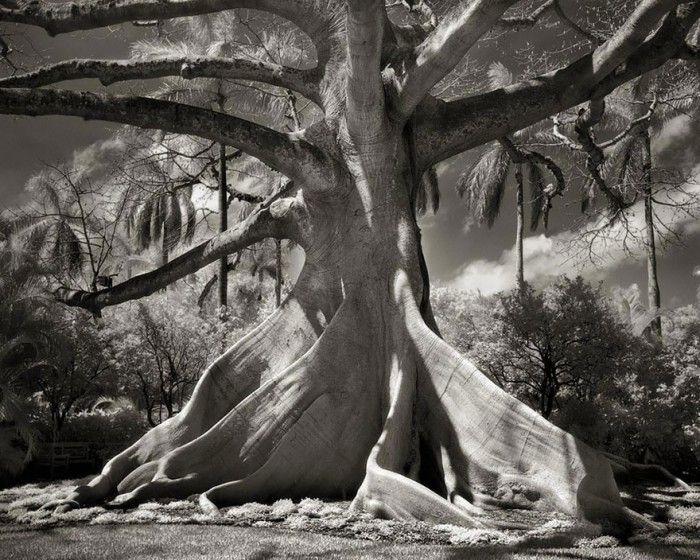 staroveke-stromy3