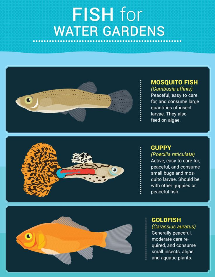Fish For Water Gardens - Water Features For Small Gardens