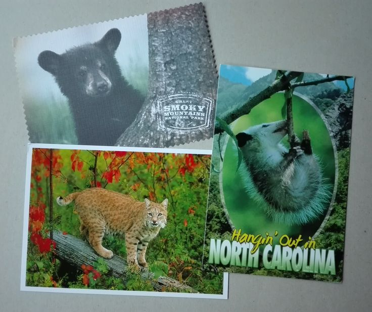 Postcards received from the USA (swap: 3 Blind Postcards - Animals)