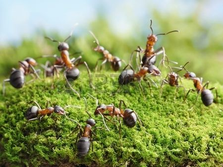 rode mierenhoop in tuin - Google zoeken