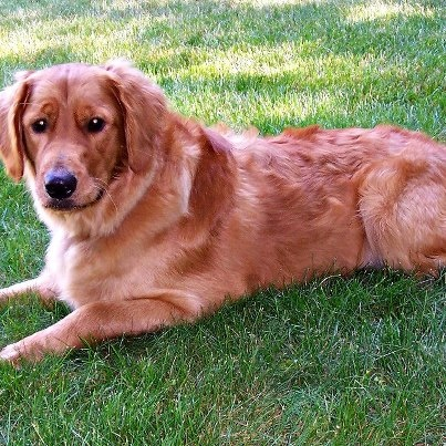 (4) VPI Pet Insurance Sniffing turned snippy when a