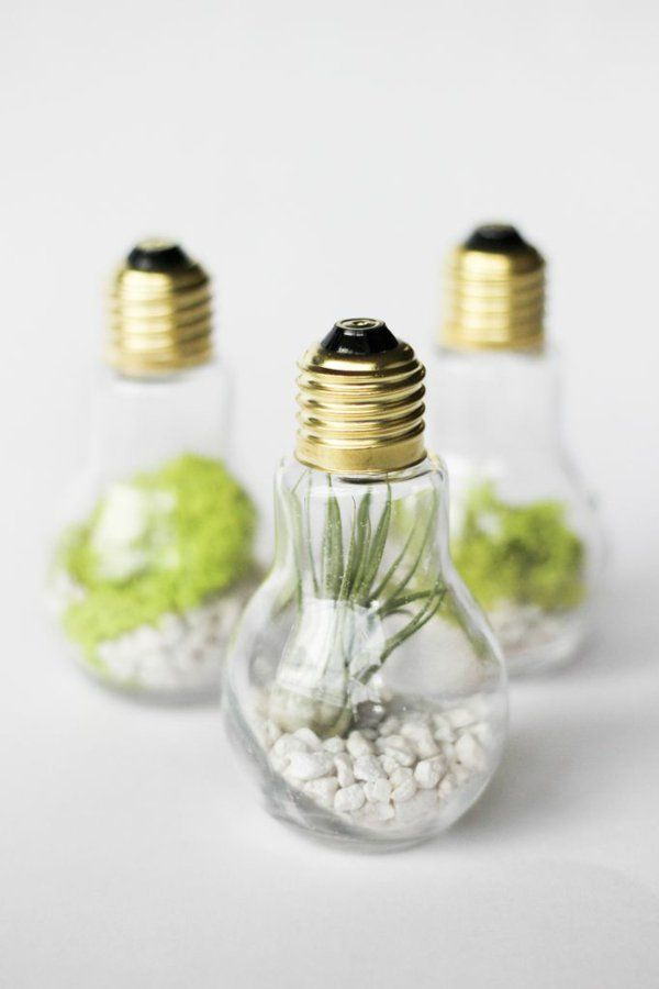alte glühbirnen bastelideen terrarium
