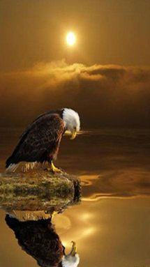 EAGLE: God Will, The Lord, Blessed America, Water Ouzel, Quote, Beautiful, God Blessed, Bald Eagles, Native American