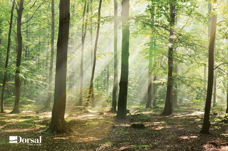 LA FORESTA NEL TUO LETTO FSC® è una certificazione in grado di garantire il processo di realizzazione del prodotto, avvenuto con legno proveniente da foreste gestite correttamente dal punto di vista ambientale, sociale ed economico. Il marchio FSC® sul prodotto è una garanzia di trasparenza che consente di fare una scelta più consapevole ed un acquisto più responsabile e rappresenta il collegamento necessario tra la foresta e il consumatore.