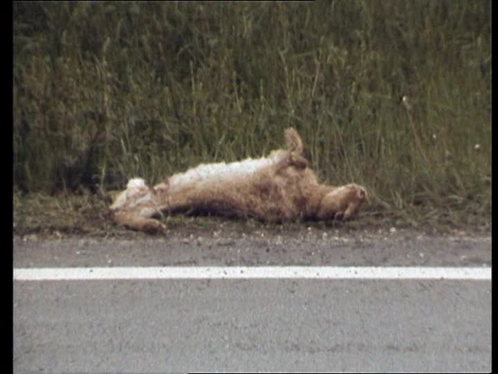 death animal - Hledat Googlem