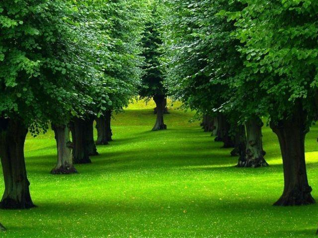 Нежно зеленый газон под деревьями в парке