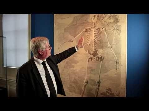 Zet een professor anatomie en een kunstenaar samen om een tekening te maken van het perfecte menselijk skelet... Dan krijg je een uniek compromis zoals deze tekening in opdracht van Albinus. Wereldwijd bestaat er 1 set van 3 tekeningen in deze stijl en die ligt in Leiden.
