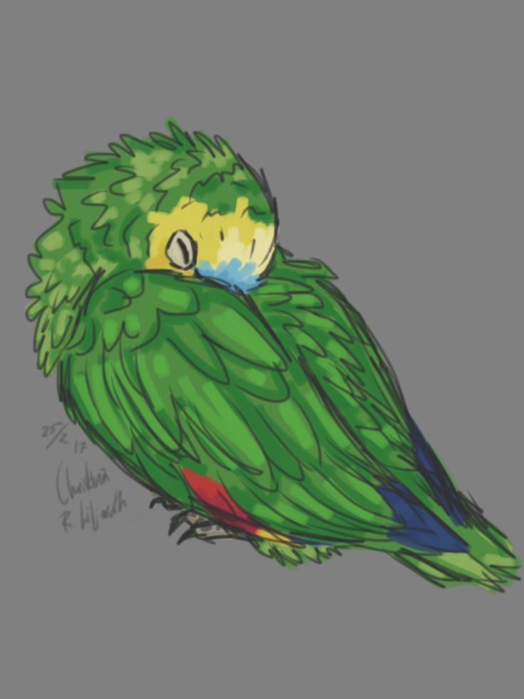 My parrot; drawing by ArtWolf