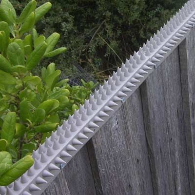 Fence Spikes | Cat Spikes | Possum Spikes | BUY ONLINE