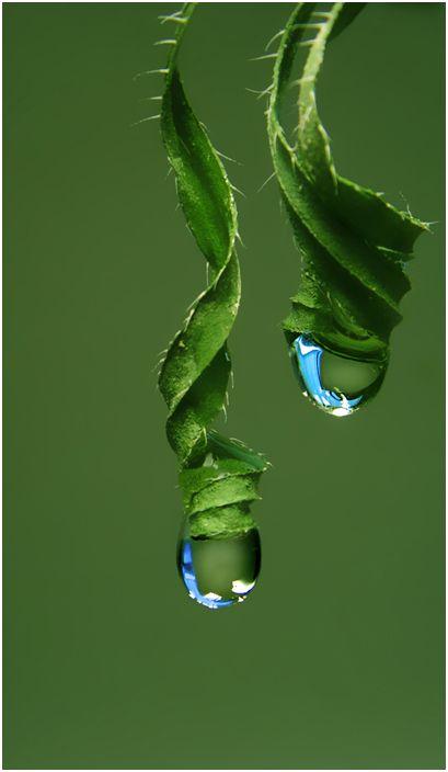 *Green http://arcreactions.com/services/social-media/