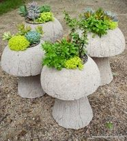 Mushrooms!  :-)I'm going to make these this summer I will be sale ing some you will have to pick up :)