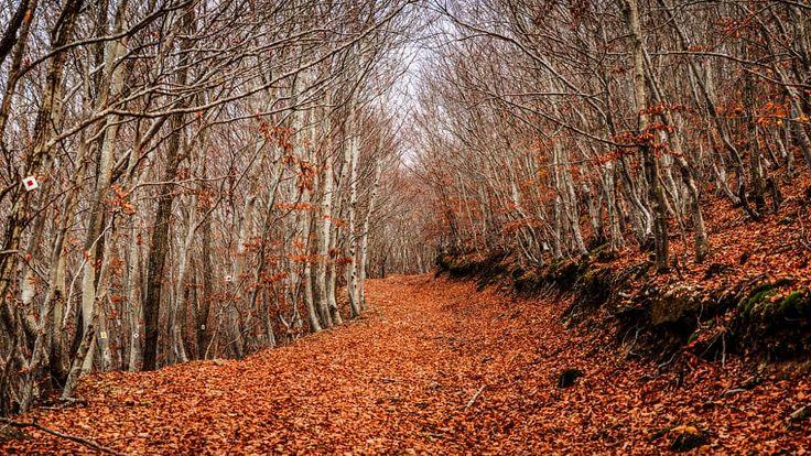 Μelancholy. The end of fall. by Sotis G on 500px Xanthi north Greece