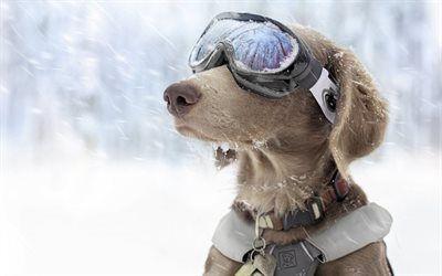 Scarica sfondi snow patrol, glasses, cane, collare