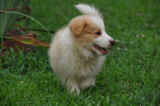 Border Collie puppy for sale in MEADOWVIEW, VA. ADN-35176 on PuppyFinder.com Gender: Male. Age: 9 Weeks Old