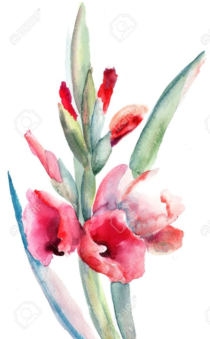 17 best ideas about Gladiolus Flower Pictures on Pinterest ...
