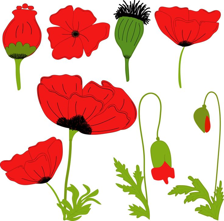 Red poppies by Orangepencil on Etsy