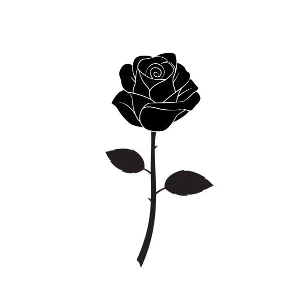 Silhouette Of Flower Roses On White Background Isolated Vector Black Rose Tattoos Rose Tattoos Rose Flower Tattoos