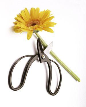 Consejos para preservar la frescura de tus flores: Corta los tallos de las flores en un ángulo de 45 grados para que éstas puedan absorber la mayor cantidad de agua posible con la mayor facilidad.