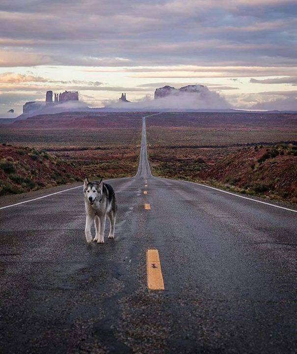 Hotels-live.com/pages/sejours-pas-chers - Monument Walley by @loki_the_wolfdog & photo by @tomparkr #awesomedreamplaces Hotels-live.com via https://www.instagram.com/p/BFJgJfHlNtE/
