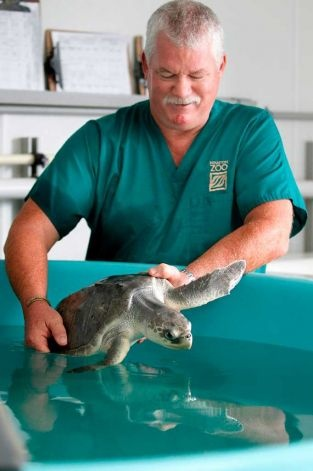 Become an aquarium/zoo veterinarian. I have always wanted to do this! But I am pretty sure my bleeding heart won't be able to handle the politics.